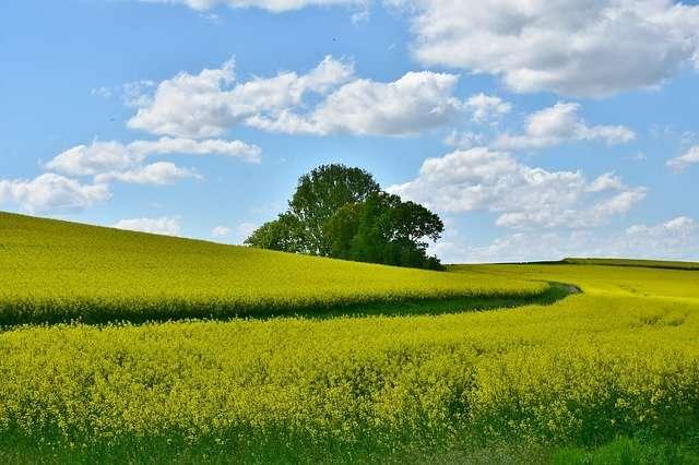 le calcul d'une surface espace vert, libre et pleine terre